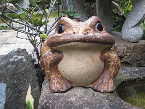 カエル.JPG